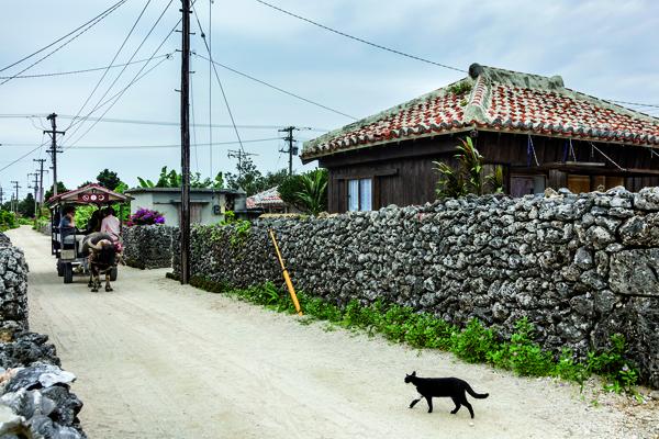 L'une des façons les plus agréables de découvrir le village de Taketomi est d'emprunter cette charrette tirée par un buffle qui le connaît comme sa poche. (Jérémie Souteyrat pour Zoom Japon)