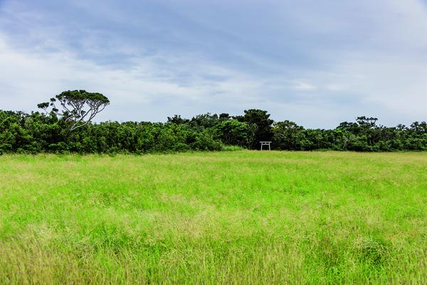 Une nature préservée au milieu de laquelle la présence d'un torii rappelle le respect que la population locale entretient à l'égard de son environnement. -Jérémie Souteyrat pour Zoom Japon-