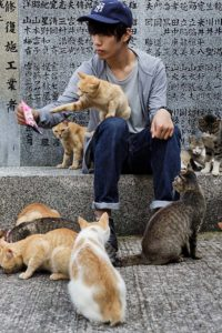 Aoshima, Ehime prefecture, September 4 2015 - Cat lovers interacting with cats at Aoshima island. Aoshima (Ao island) is one of the several Ç cat islands È in Japan. Due to the decreasing of its poluation, the island now host about 6 times more cats than residents.