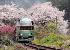久大本線でも屈指の桜が綺麗な豊後中川駅に来ました。花の中から抜け出して行く列車が見られます。
