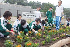 fleurs-parterres-japon