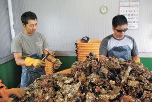 huitre-abe-toshimi