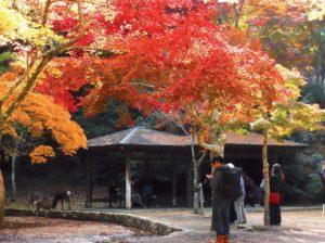 parc-momija-dani-ile-de-miyajima-japon-2