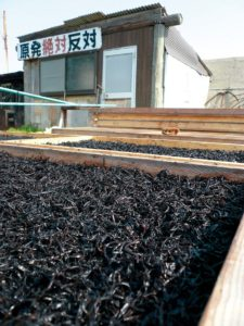 reportage-manifstation-centrale-nuclaire-hijiki-algues-japon