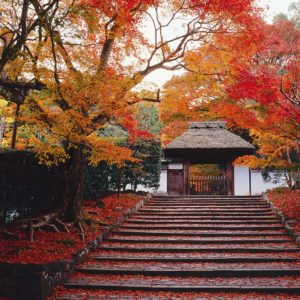 temple-anraku-ji-japon