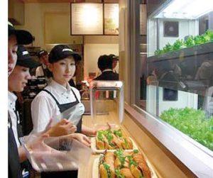salade-fraiche-subway-yasai-labo-japon
