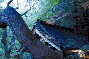 toit-chuson-ji-hiraizumi-japon