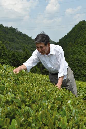 Harima Yoshiyuki est fier de ses plantations de thé vert entièrement bio. (Elodie Hervé pour Zoom Japon)