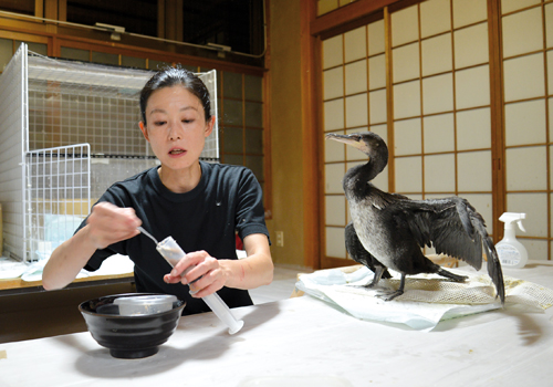 """Mariko prend grand soin de ses """"collègues de travail"""".  ©Elodie Hervé pour Zoom Japon"""